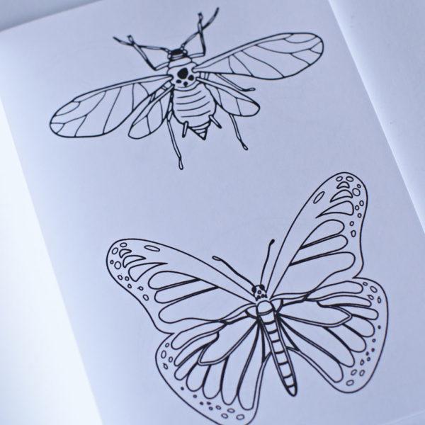 bug-003-IMG_3008-3.jpg